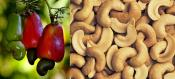 How To Use Cashew In Your Kitchen