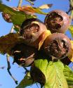 The Medlar - Brings Blast From The Past