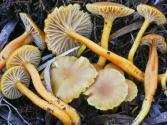 What Are The Types Of Mushrooms?