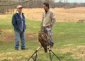 Falconry Rabbit Hunting - An Overview