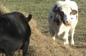 Tour Of Farm Sanctuary