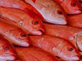 Tips On How To Buy Fresh Fish