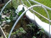 "Movable ""hoop Houses"" Or Green Houses At Wegmans Organic Farm"