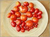 How To Use Different Kinds Of Tomatoes - Cooking Tutorial
