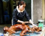 China's Dog Meat Industry A Shame!