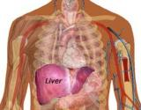 Benefits Of Liver Cleanse Diet