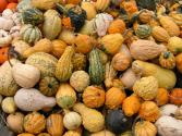 Best 5 Winter Squash Varieties To Cook