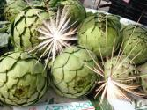 Weird But True – Artichokes Explode In Italy!