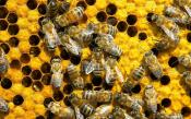 How To Save Bees From Disappearing