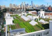 A Massive Rooftop Farm - An Urban Wonder!