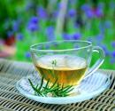 Benefits Of What Are The Major Gynostemma Tea