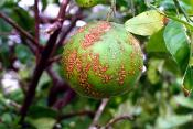 How Abandoned Citrus Groves Are Posing A Problem In Florida