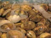Is It Safe To Eat Clam During Pregnancy?