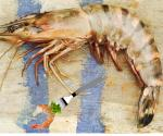 Invasion Of The Giant Shrimp Rattles Gulf Coast Diners