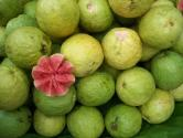 What Are The Health Benefits Of Guava