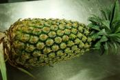 Pineapple Menu