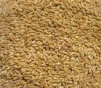 How To Clean Wheat Seeds