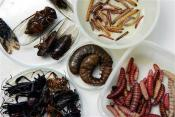 Now Dutch Scientists Want Us To Eat Bugs For Meat