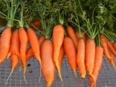 How To Go On A Raw Carrot Diet?