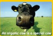 Choosing Organic Milk Over Normal Milk Can Offset Climatic Change