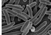 E-coli Infection Claims 2 More Lives In Germany