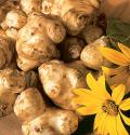 Growing Jerusalem Artichoke
