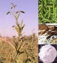 What Do You Know About Guar Gum