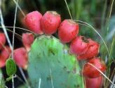 How To Eat Prickly Pear?