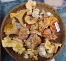 How To Use Wild Mushrooms At Home
