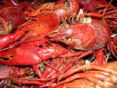 Lobster Allergy-causes, Symptoms, And Cure