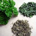 Tips To Store Parsley