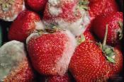 How To Prevent Mold On Strawberries In Storage