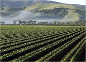 How California 'salad Bowl' Pesticides Are Destroying Public Health