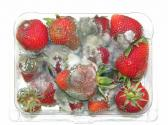 Frosted Fruit Mold