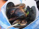 Herbed Mussels In Wine