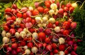 Cold Sweet And Sour Radishes