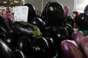 South Of The Border Eggplant