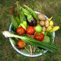 Summer Harvest Bounty