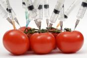 Can Genetically Modified Foods Eradicate World Hunger?