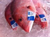 Electronic Tags To Protect Against Seafood Fraud