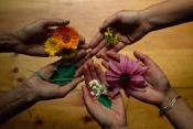 5 Reasons To Use Herbal Colors For Holi
