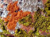 Wanna Try Moss Chocolate Or Lichen Candy?