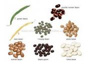 What Does Beans Have In It That's Good For You?