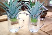 Regrow Food From Kitchen Wastes!