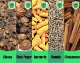 Top 5 Popular Spices - How They Flavor Your Health