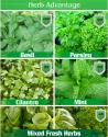 Top 5 Popular Herbs - Health Beyond Flavor
