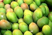 Eat Raw Mangoes To Remain Healthy And Young