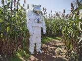 Space Veggies Next On Agenda For Nasa