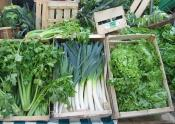 How To Store Green Vegetables