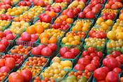 Organic Tomatoes More Nutritious, Says Brazilian Study